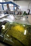 Продукция дополнительного виргинского оливкового масла, холодный обрабатывать стоковая фотография rf