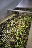 Продукция дополнительного виргинского оливкового масла, холодный обрабатывать стоковое изображение