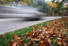 проезжий листьев смотрря прищурясь Стоковая Фотография
