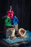 Проект малого дома и плана птицы, который нужно построить его Стоковая Фотография RF