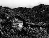 Прожитие джунглей стоковые изображения rf