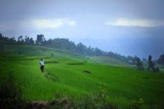 Прожитие фермера Стоковая Фотография RF