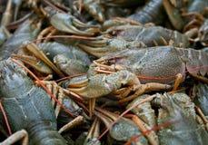 прожитие crawfish Стоковые Изображения