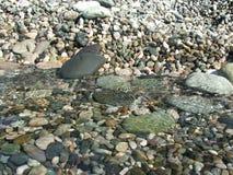 прозрачная вода Стоковые Фотографии RF