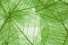 Прозрачная предпосылка листьев Стоковые Изображения RF