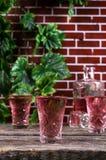 Прозрачное розовое питье Стоковое Изображение
