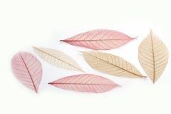 Прозрачные листья стоковые фото