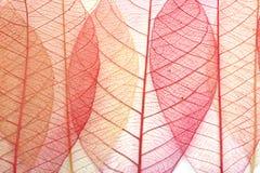 Прозрачные листья стоковое изображение rf