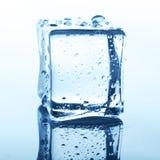 Прозрачный куб льда с отражением на белизне Стоковая Фотография