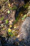 Прозрачный поток леса пропуская над утесами и листьями Стоковое Изображение