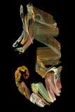 произведенная фракталь компьютера Стоковые Фотографии RF