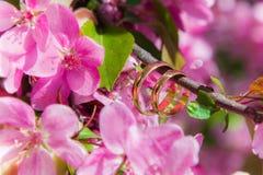 произведенное 3d венчание кольца изображения Стоковое Фото