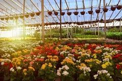 Производитель питомника заводов, деревьев и кактуса стоковое фото rf