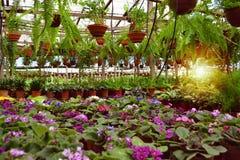 Производитель цветка станции питомника стоковое фото rf