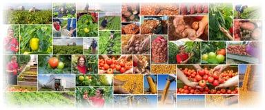 Производство продуктов питания - обрабатывающ землю - коллаж земледелия стоковое фото rf