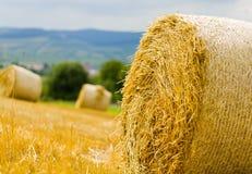 Производительное земледелие Стоковая Фотография