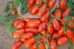 Производительный томат сливы Стоковая Фотография