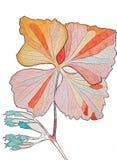 Проиллюстрированный покрашенный цветок Стоковая Фотография