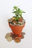 Проинвестируйте, воспитайте и вырастите южно-африканские деньги стоковые фотографии rf