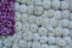 Проинфильтрируйте: Flowerbed/стена цветков - украшенный дисплей стоковые фотографии rf