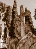 Проклятый ангел стоковая фотография rf