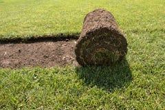 Прокладка травы Стоковая Фотография