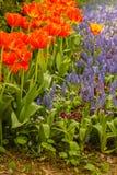 Прокладки цветенй в парке Стоковое Изображение RF