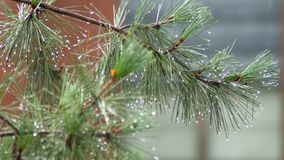 Проливной дождь брызгает дорогу, и деревья в жилом районе гроза лета видеоматериал