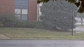 Проливной дождь ветров высокий во время грозы видеоматериал