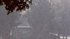 Проливной дождь над зелеными листьями деревьев, сезон лета сток-видео