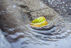 Проливной дождь падает падать на улицу города с лист осени Стоковое Изображение RF