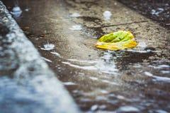 Проливной дождь падает падать на улицу города с лист осени Стоковые Изображения