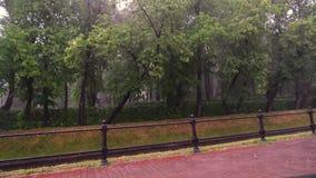 Проливной дождь с ветром, грозой, плохой погодой лета Зеленые деревья на предпосылке Дождевые капли с падением выплеска в лужицу видеоматериал
