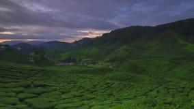 Промежуток времени восхода солнца на плантации чая гористой местности Малайзии Камерона сток-видео