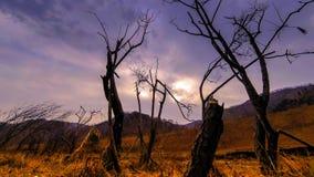 Промежуток времени дерева смерти и сухой желтой травы на mountian ландшафте с облаками и солнцем излучает Горизонтальное движение