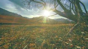 Промежуток времени дерева смерти и сухой желтой травы на mountian ландшафте с облаками и солнцем излучает Горизонтальное движение видеоматериал