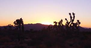 Промежуток времени: Заход солнца на национальном парке дерева Иешуа, пустыне Калифорнии акции видеоматериалы