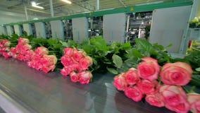 Промежуток времени конвейерной ленты транспортируя цветки сток-видео