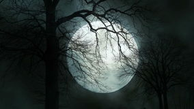 Промежуток времени пугающего силуэта дерева лунного света Мистическая ноча луны акции видеоматериалы