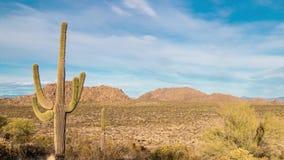 Промежуток времени пустыни Аризоны с представительным cactua saguaro видеоматериал