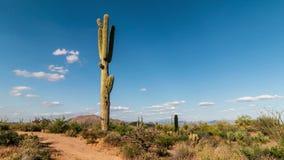 Промежуток времени пустыни Феникса Аризоны с кактусом и облаками сток-видео