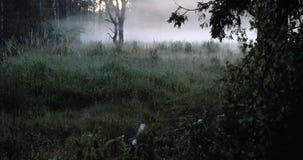 Промежуток времени тумана в лесе видеоматериал