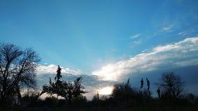 промежуток времени 4k захода солнца на национальном парке дерева, силуэтах с Солнцем сток-видео