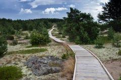 Променад, пыльная буря, песок, можжевельник, окружающая среда лишайников на Mohni Стоковые Фотографии RF