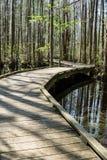 Променад в болоте Стоковые Фото