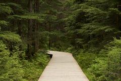 Променад в поворотах леса к левой стороне Стоковые Изображения