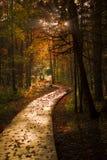променад осени режет темную пущу деревянную Стоковое Изображение RF