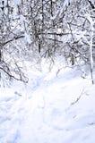 Промоина в лесе зимы fairy Стоковое Изображение RF