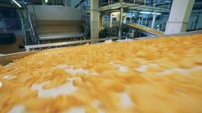 Промышленная машина транспортирует закуски картошки видеоматериал