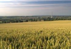 Промышленная пшеница Стоковая Фотография